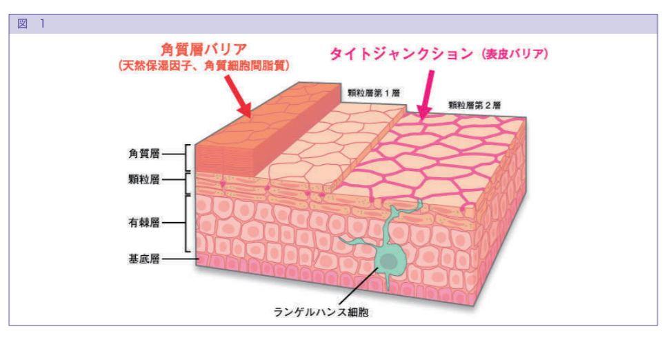 皮膚の過敏
