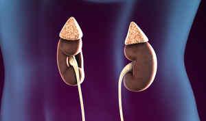 副腎は、腎臓の上にある器官です
